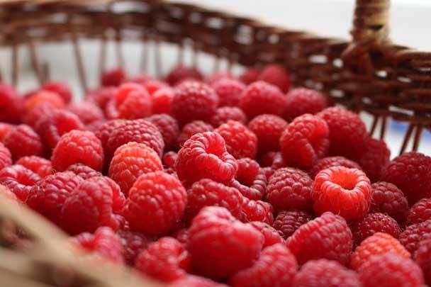 Manfaat buah raspberry untuk kesehatan