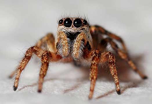 Cara mengusir laba-laba