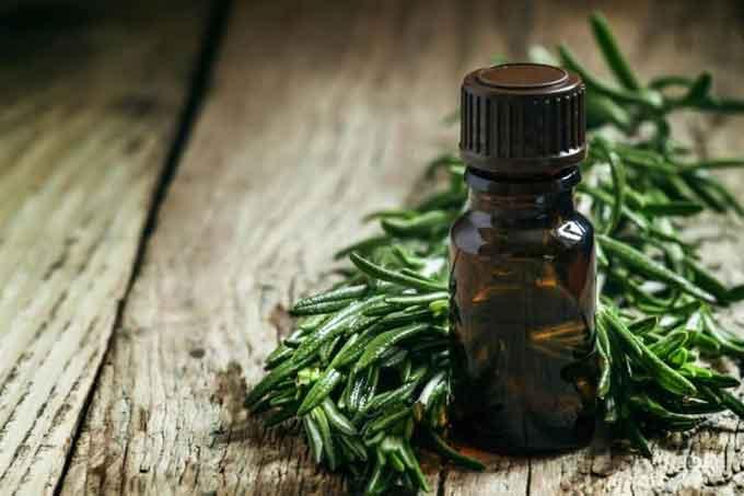 cara memanjangkan rambut dengan minyak pohon teh