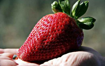 Manfaat Masker Strawberry