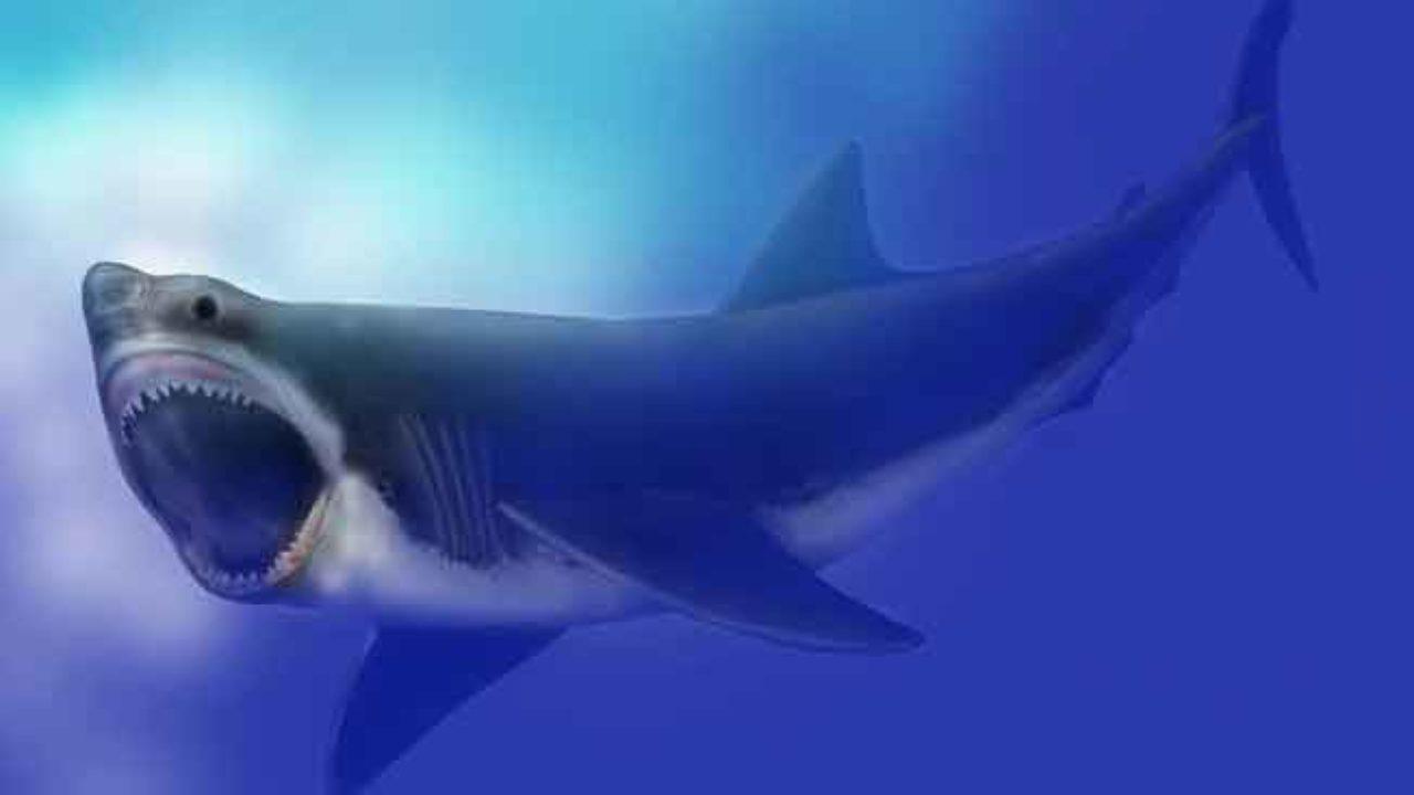 94 Koleksi Gambar Ikan Hiu Vs Paus Gratis Terbaik