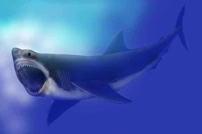 hiu megalodon