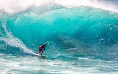 hiu terbesar di dunia