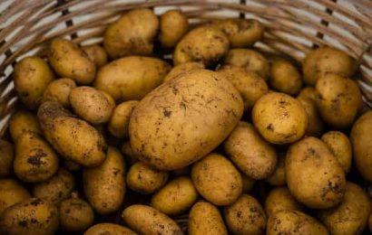 Kandungan kentang