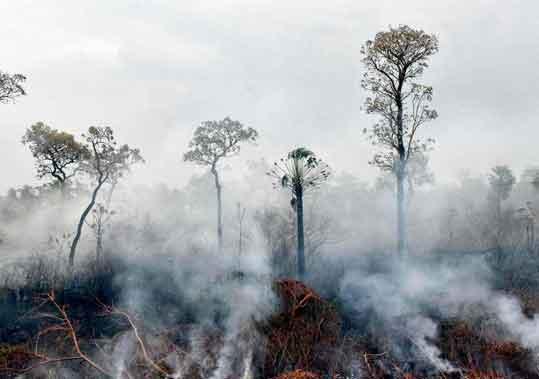 Dampak kerusakan lingkungan