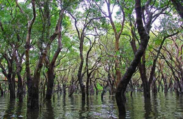 Fungsi hutan mangrove, Pengertian serta karakteristiknya (lengkap)