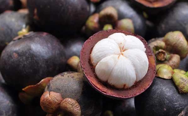 Efek samping buah manggis