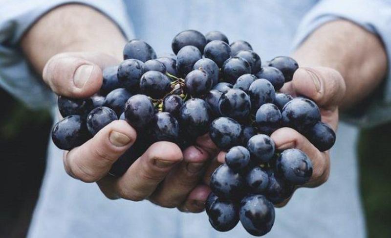 manfaat buah anggur hitam