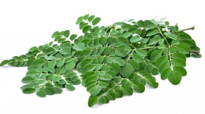 manfaat daun kelor untuk anak