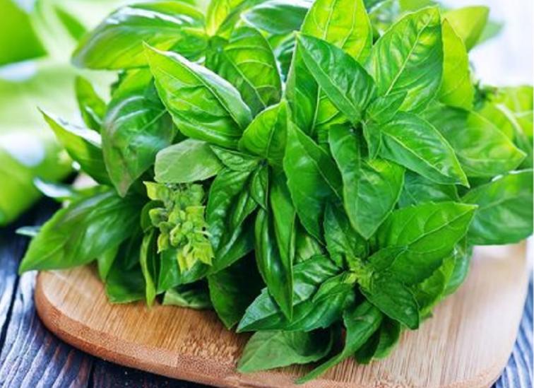 manfaat daun kemangi untuk wanita