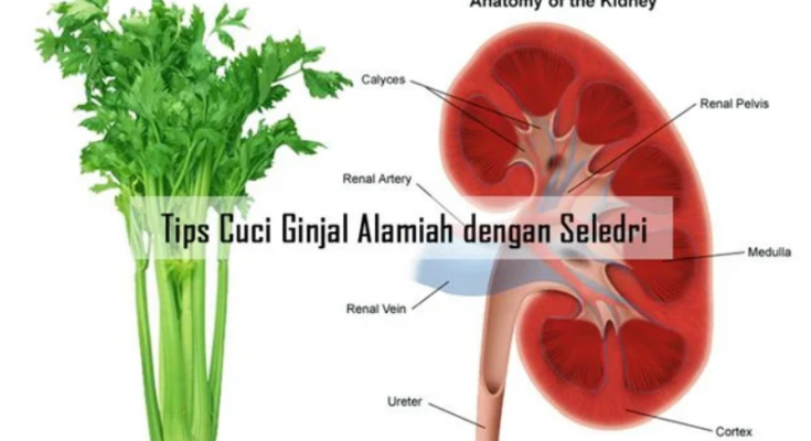 manfaat daun seledri untuk ginjal