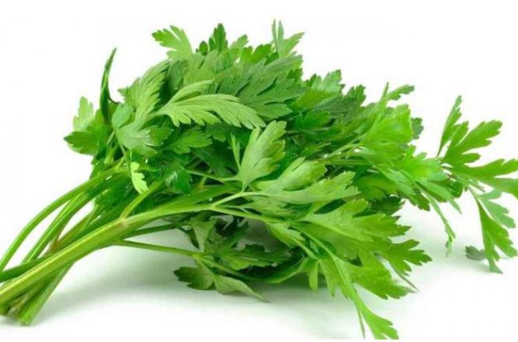 manfaat rebusan daun seledri