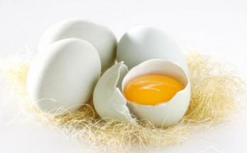 manfaat kuning telur bebek