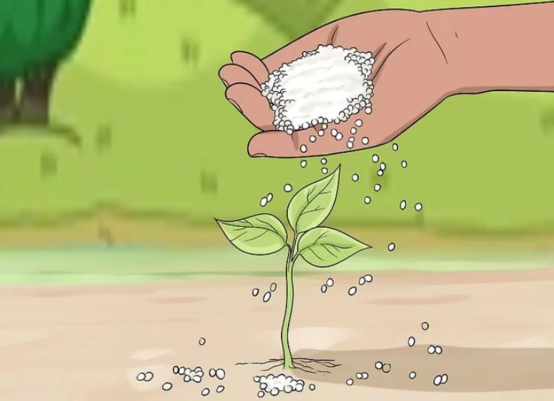 cara menggunakan pupuk urea