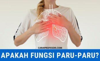apakah fungsi paru paru