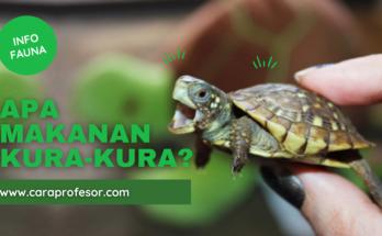 apa makanan kura-kura