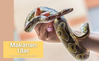 makanan ular