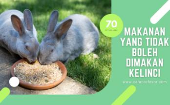 makanan yang tidak boleh dimakan kelinci